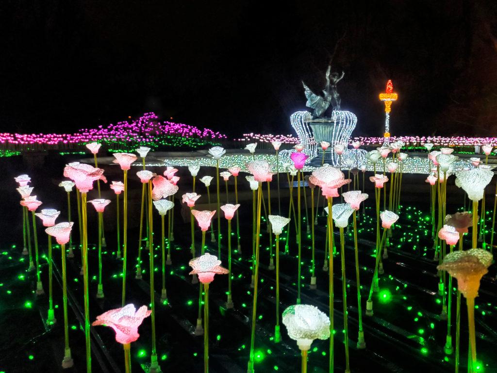 Ogród Różany - Królewski Ogród Światła